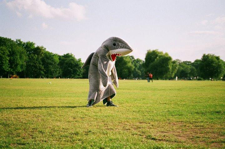 Whatley Shark