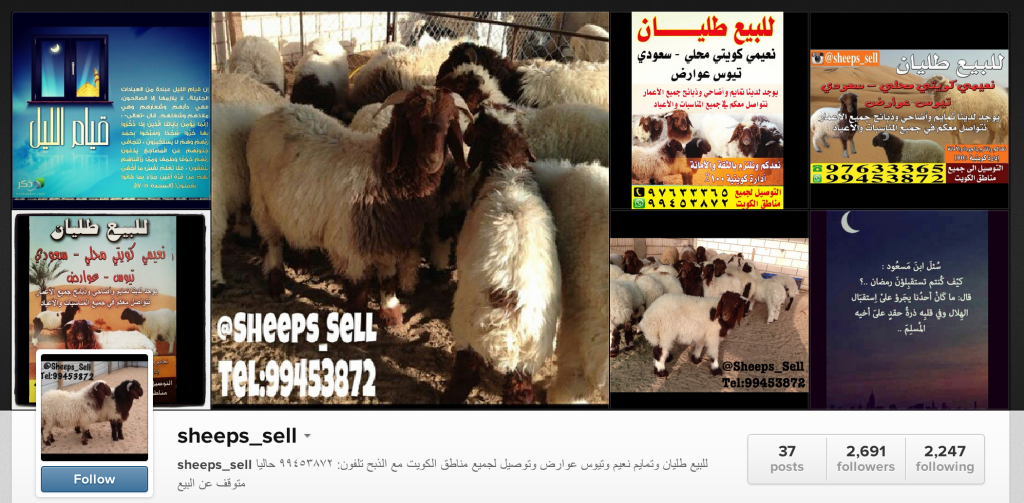 Sheep Selling on Instagram