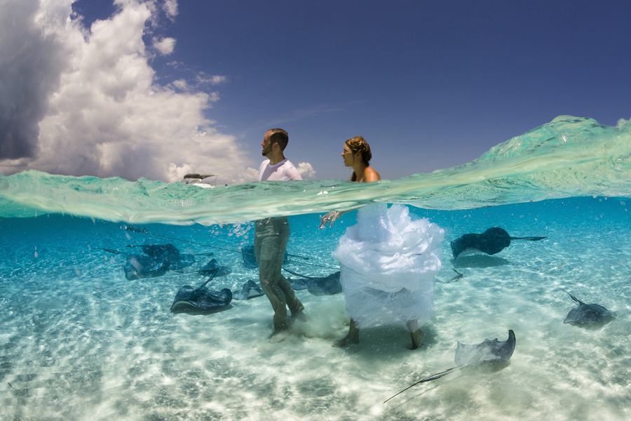 "Whilst shooting the majestic Southern Stingray in the crystal clear water of the Sandbar in Grand Cayman, I was stunned when this newly wed couple arrived, the bride was still in her wedding dress! This shot ""Dressed for Adventure"" for me captures the beginning of a new life together, one where a couple will brave the troubles of the world hand in hand. The couple march confidently towards the clouds in the frame ignoring the beasts at their feet, this is an adventure they will seek together"